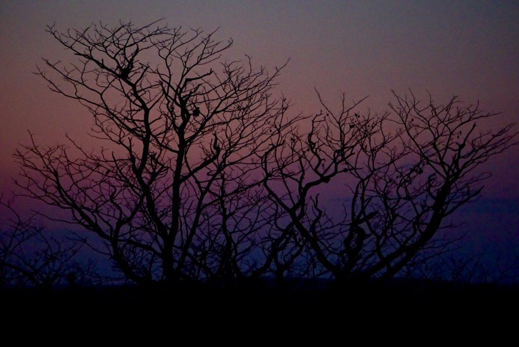 Sonnenuntergang im Etosha Nationalpark.