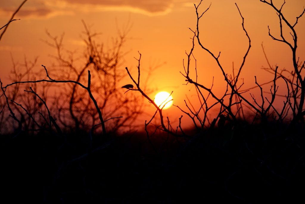 Sonnenaufgang im Etosha Nationalpark.