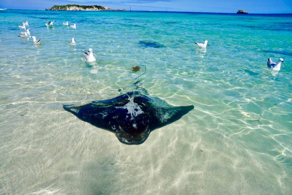 Australiens Südwesten - Hamelin Beach - Rays