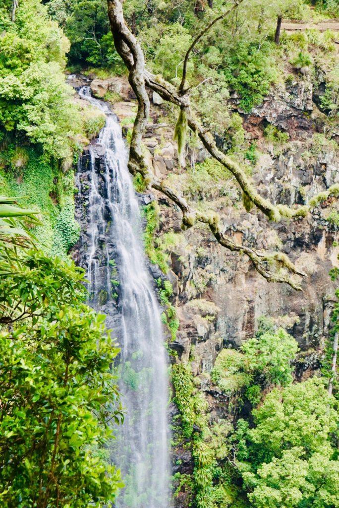Morans Falls im Lamington National Park