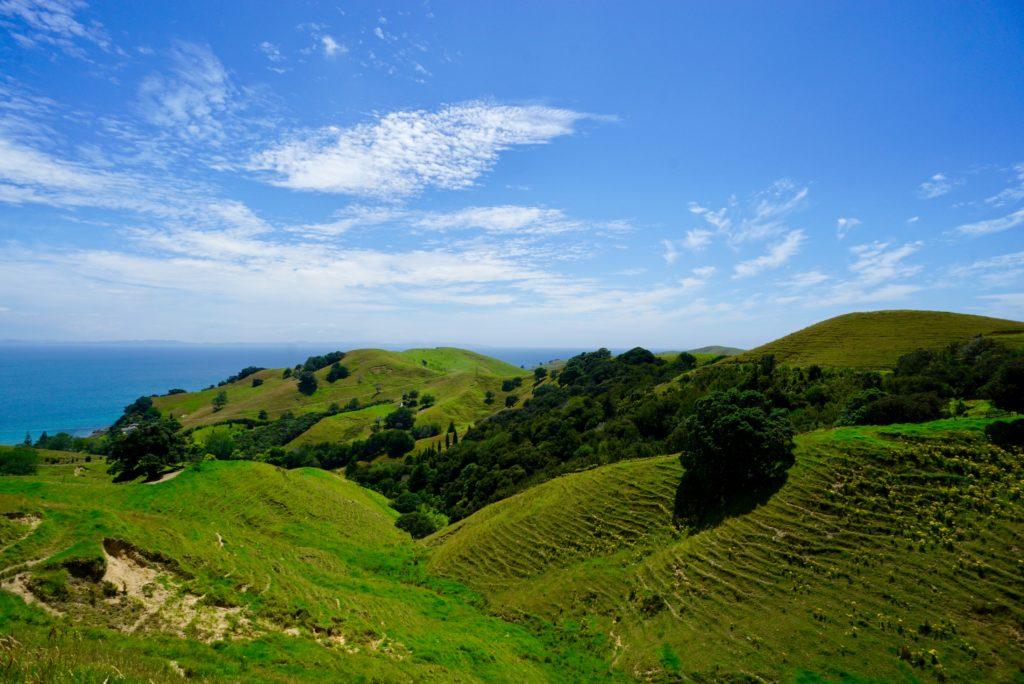Hügellandschaft in Neuseeland mit Schafspuren (engl. sheep tracks)