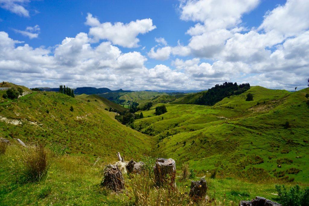 Neuseelands Nordinsel - Typische Hügellandschaft