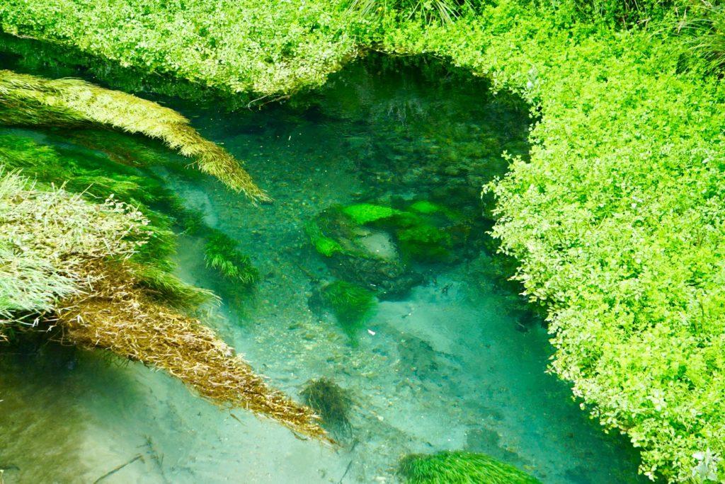 Blue Spring des Waihou River auf der Nordinsel Neuseelands
