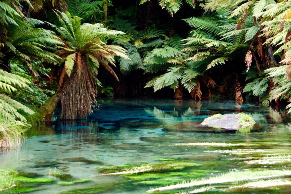 Blue Spring - Nordinsel Neuseeland
