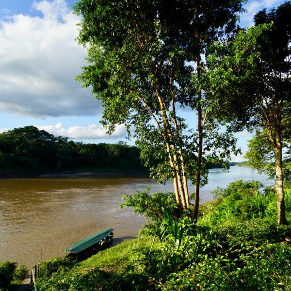 Amazonas Regenwald in Peru, bei Puerto Maldonado